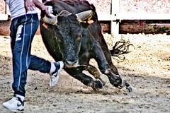 Courses, abrivados, encierros, roussatailles... site fotos 8138060976_f3d0f54ae5_m