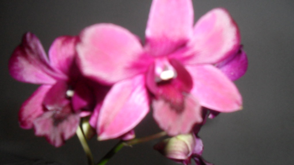 Orhideele lui Victor - Pagina 13 8118415672_25b20336f3_b