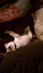[Scrapbook] Link the Siberian Husky - Page 2 8524557529_37c9100966_m