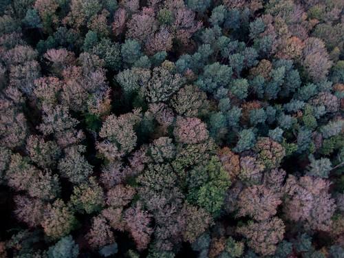 KAP au dessus de la forêt du Gavre 8142220050_92aa3c6654