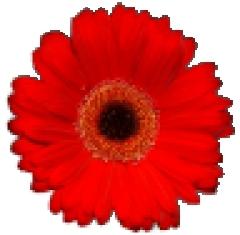 Récupération d'une image vectorisée par paintshop ds RM Fleur