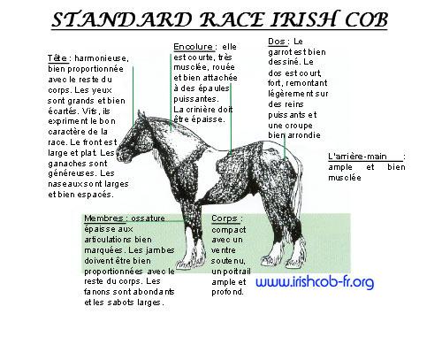 stud book et compagnie STANDARD-IRISH-COB-2