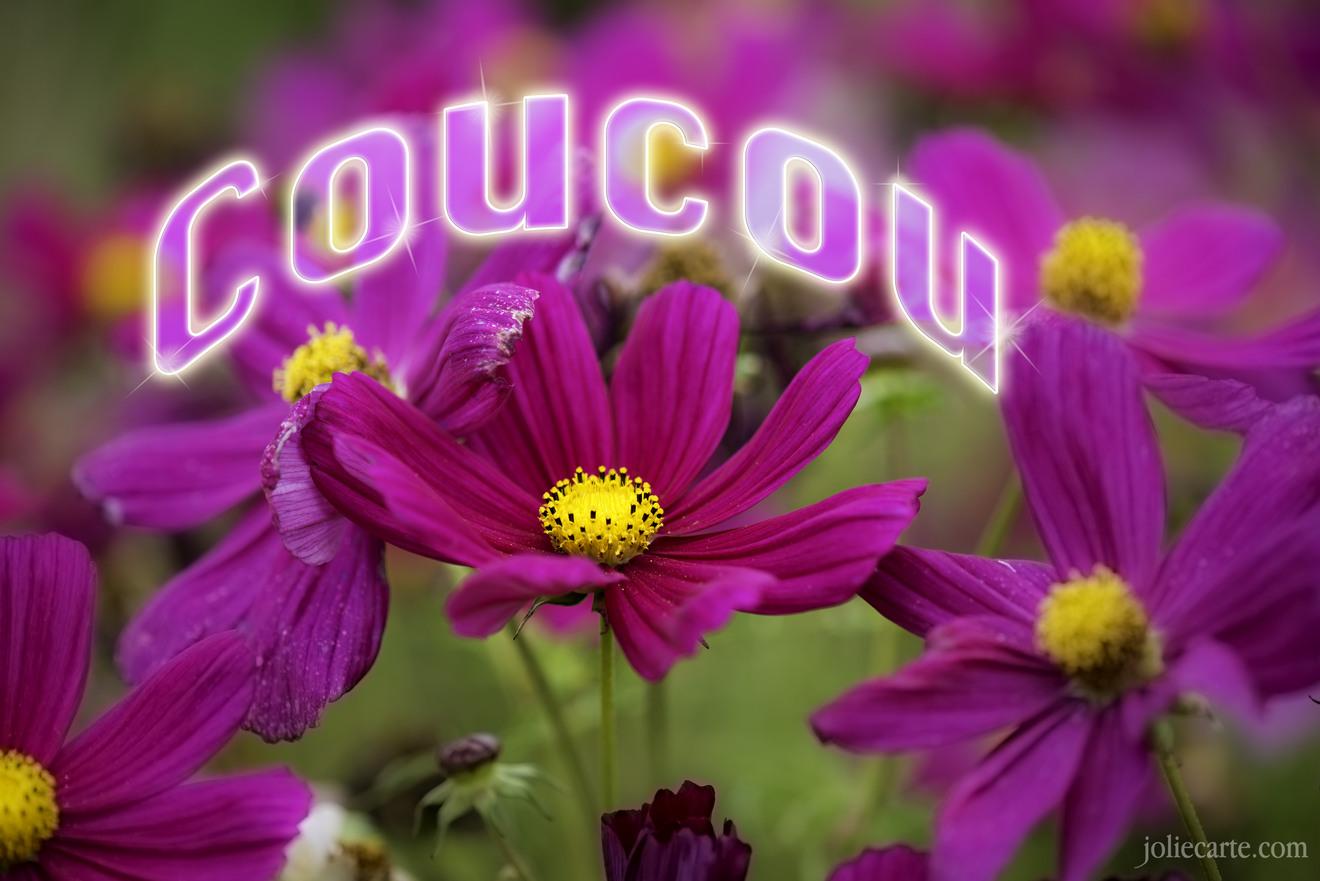 Discussion sur l' Etoile de TF1 du 13 juin  2017 - Page 5 Coucou-fleur