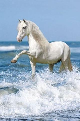 Обожаю лошадей!   741335-480