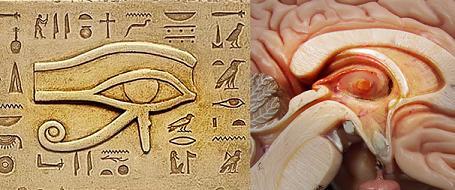 La glándula pineal: ¿nuestro tercer ojo? Zj50ca7e98