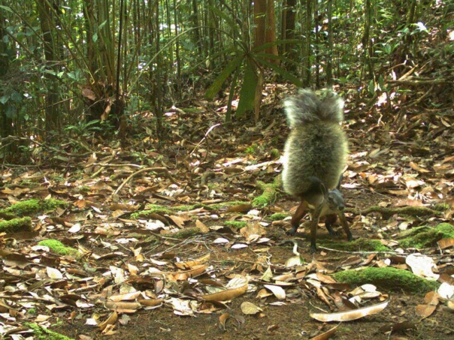 23 фотографии, в которые трудно поверить 7565260-R3L8T8D-650-squirrel-with-bushiest-tail