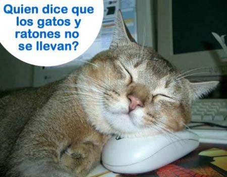 Bienvenidos al nuevo foro de apoyo a Noe #217 / 26.01.15 ~ 28.01.15 - Página 39 Fotos-de-gatos-graciosos-gatos-ratones