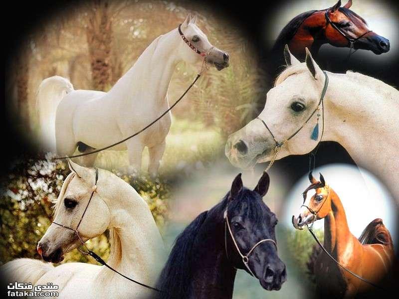 عالم الخيول.........مين بيحب الخيول؟؟؟؟؟؟؟؟؟؟ 1271110141