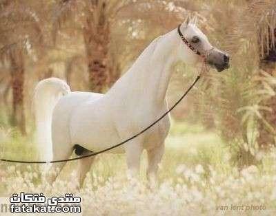 عالم الخيول.........مين بيحب الخيول؟؟؟؟؟؟؟؟؟؟ 1271110191