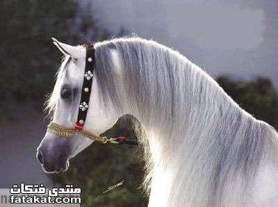 عالم الخيول.........مين بيحب الخيول؟؟؟؟؟؟؟؟؟؟ 1271110318