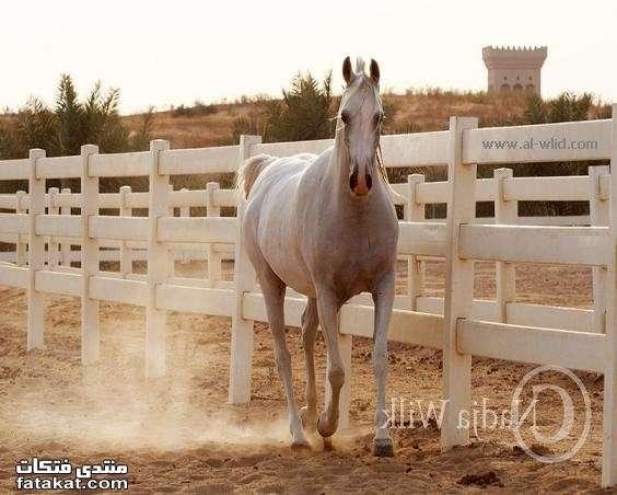 عالم الخيول.........مين بيحب الخيول؟؟؟؟؟؟؟؟؟؟ 1271110947