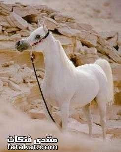 عالم الخيول.........مين بيحب الخيول؟؟؟؟؟؟؟؟؟؟ 1271111384