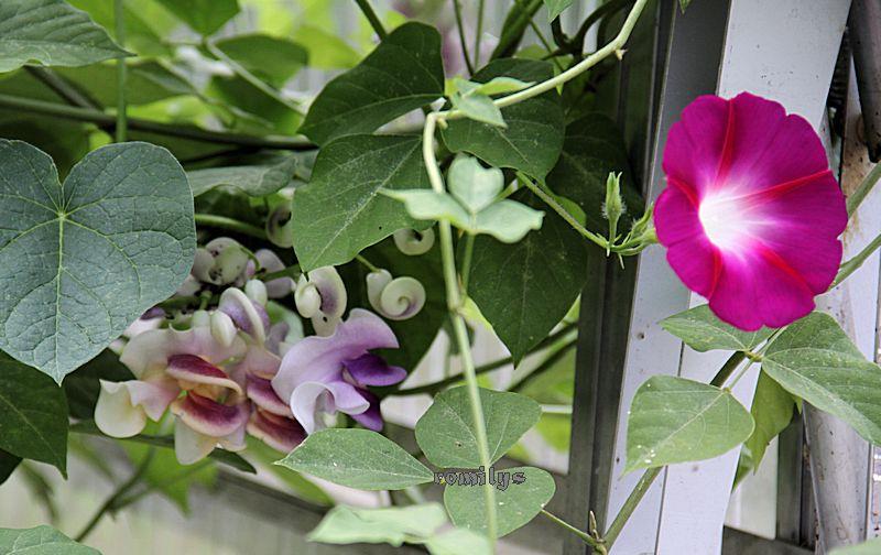 Kübelpflanzen - Seite 16 F196t292p111168n5_rGtQFZoK