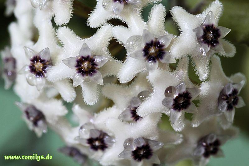 Blüten 2014 - Seite 23 F22t3892p46255n2