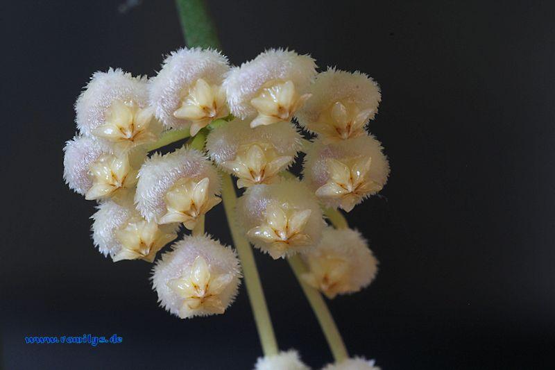 Blüten 2014 - Seite 23 F22t3892p46794n3_CmyVwhbH