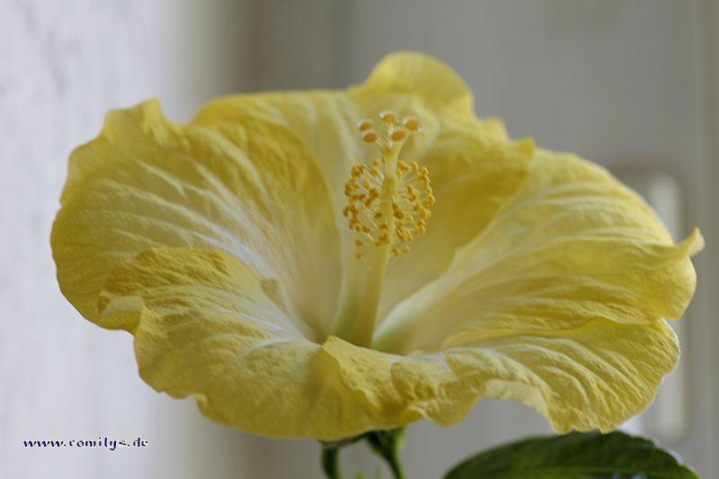 Blüten heute  - Seite 2 F29t3992p47819n2_eahZlCBJ