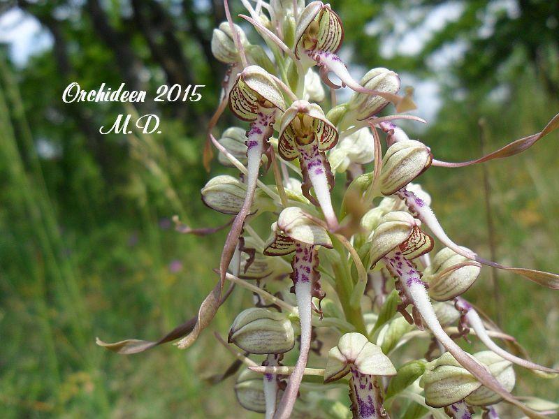 Einheimische Orchideen am Standort - Seite 2 Pictures_u8800_KtmPEZLN