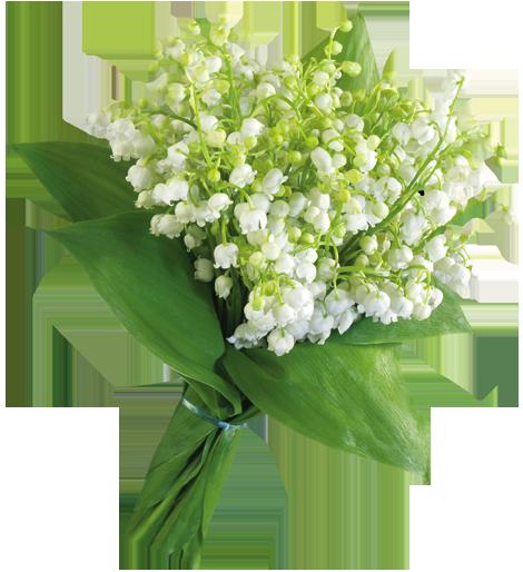 في روحك  وردة لمن   ترسل عطرها  / إهداء  لمن تحب بلغة الورد 1210162225334kNi