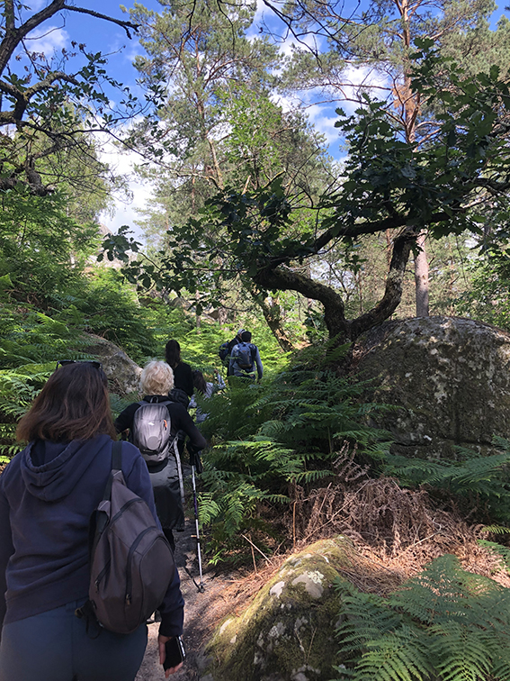 Tourisme : récolter des fruits de saison en forêt de Fontainebleau  IMG_6628_BD