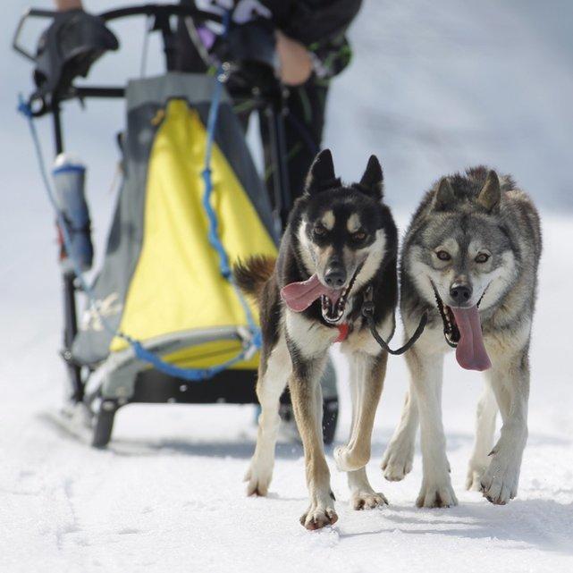 Championnats d'Europe de chiens de traîneaux du 23 au 26 février 2012 à Gryon (Suisse). 689560_pic_970x641