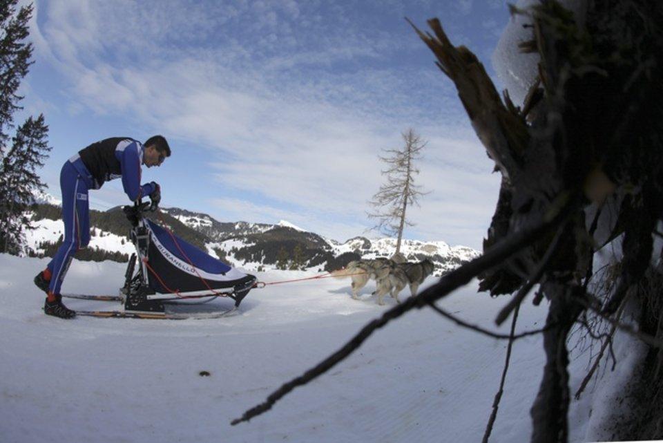Championnats d'Europe de chiens de traîneaux du 23 au 26 février 2012 à Gryon (Suisse). 689562_pic_970x641