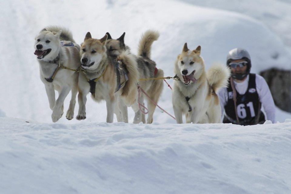 Championnats d'Europe de chiens de traîneaux du 23 au 26 février 2012 à Gryon (Suisse). 689566_pic_970x641