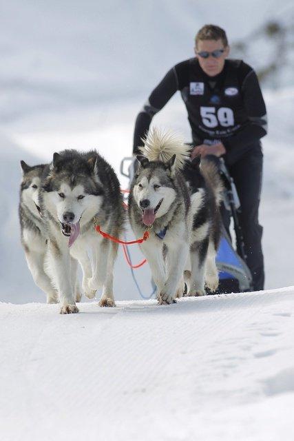 Championnats d'Europe de chiens de traîneaux du 23 au 26 février 2012 à Gryon (Suisse). 689568_pic_970x641