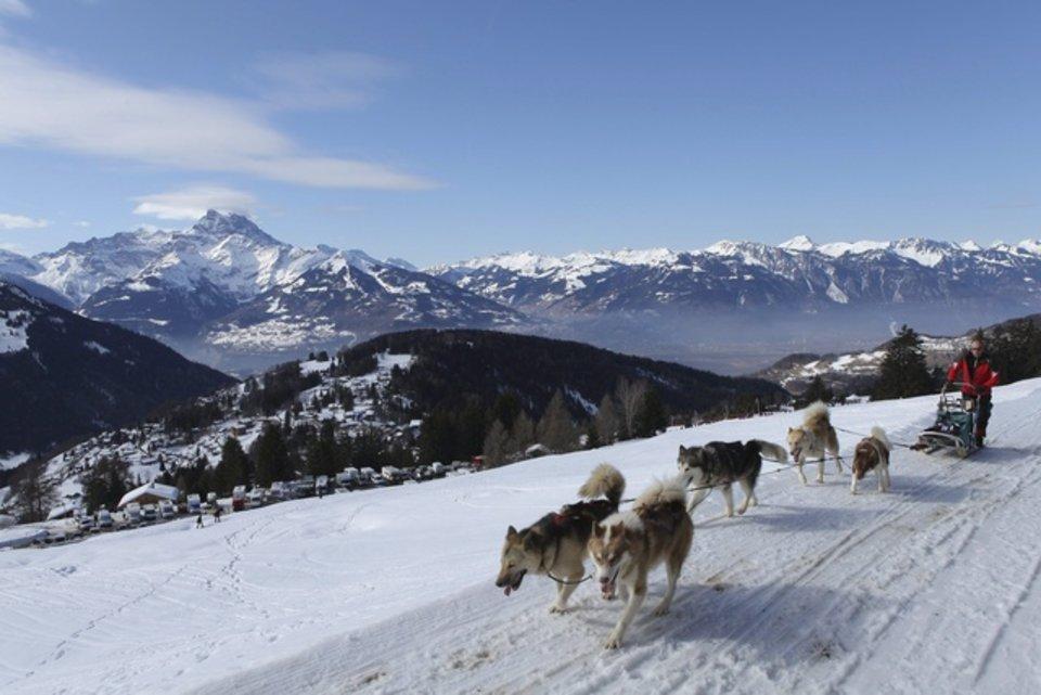 Championnats d'Europe de chiens de traîneaux du 23 au 26 février 2012 à Gryon (Suisse). 689570_pic_970x641