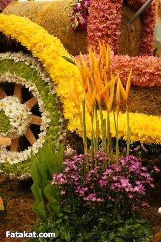 مهرجان الزهور روووعة 13220463595045