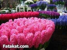 مهرجان الزهور روووعة 13220468353419