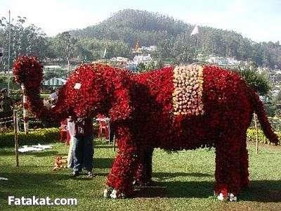 مهرجان الزهور روووعة 13220472065445