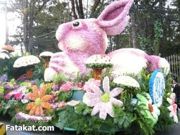 مهرجان الزهور روووعة 13220473133868