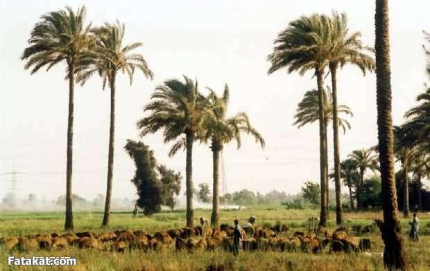 جمال الريف المصري 13830965176291