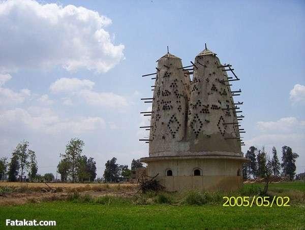 جمال الريف المصري 13830968521038