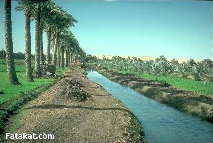 جمال الريف المصري 13830969262110