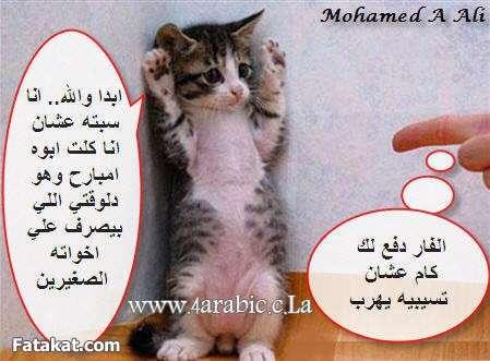 الحسوبية فى القطط 13708874409896