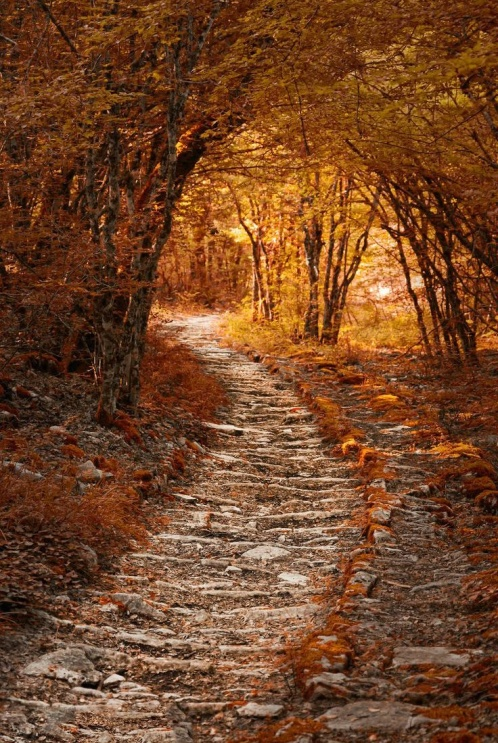 Осень в моем  городе 9088010-R3L8T8D-498-2