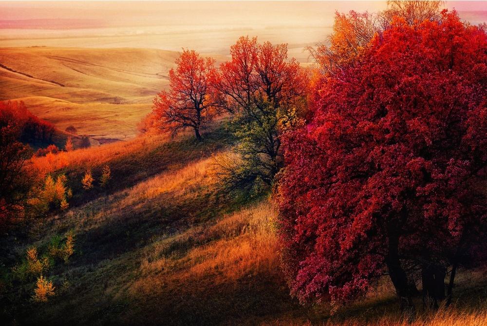 Осень в моем  городе 9096660-R3L8T8D-1000-55