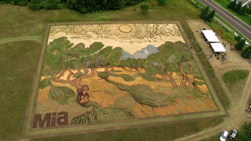 анектоды без политики - Страница 3 2056660-R3L8T8D-850-land-art-painting-field-van-gogh-olive-trees-stan-herd-12