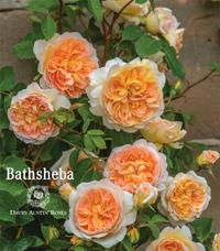 une  fleur  à trouver  - ajonc - 7 juin Bravo Martine Bathsheba-Austin
