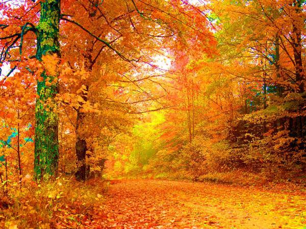 Jesen - Page 2 Vermont-autumn-vicky-brago-mitchell