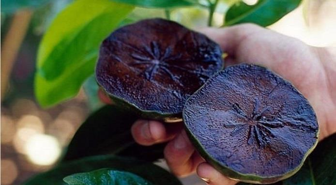 """Tiens le Yami Yami no Mi."" L_3431_sapote-noire-fruit-go-t-chocolat"