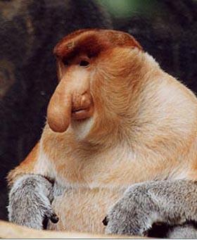 Difé - La Balade Des Moches (Prod Kalams) Proboscis-monkey-1