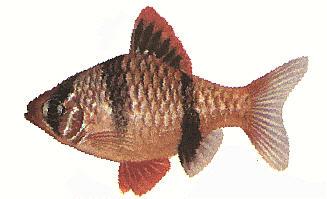 "Конкурс "" Рыба "" - Страница 3 534"