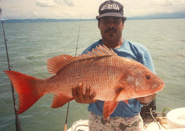 La Pesca del Pargo (Lutjanus Sp.) por José Manuel López Pinto  / Actualizado al 17/10/11 Lucol_u4