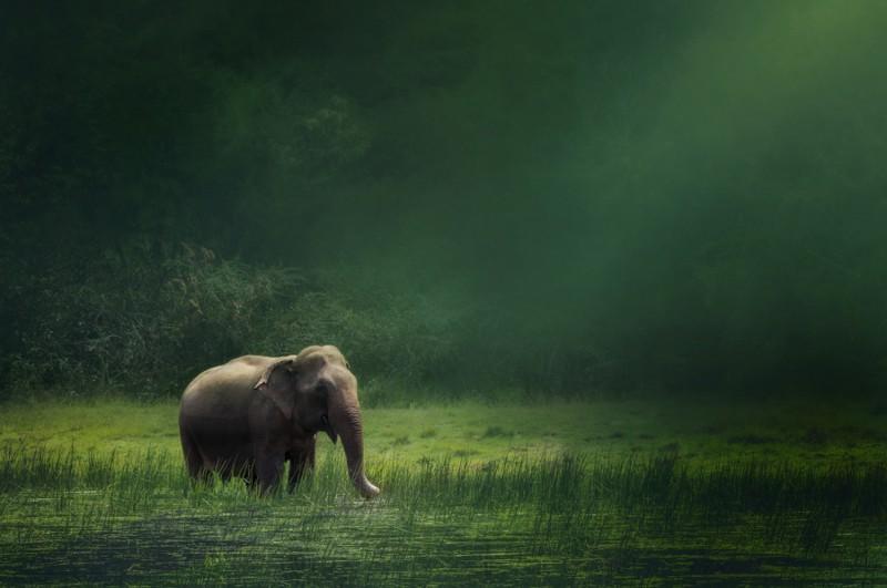 20 очень необычных фотографий животных 5_18