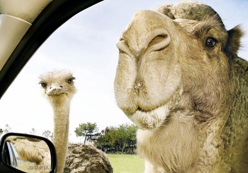 20 очень необычных фотографий животных 6_16