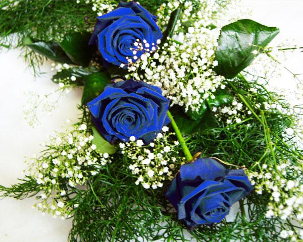 Cvetna oaza - Page 5 Roses_blue_3