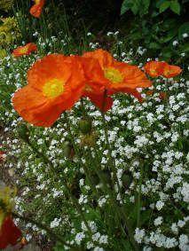 une fleur à découvrir par blucat (21juillet)trouvée par ajonc 7wuww4iu