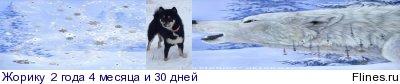 Вес щенка - Страница 5 1246972